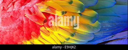 Papagei Federn, rot, gelb und blau exotische Textur, Hintergrund - Stockfoto
