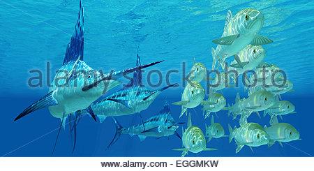 Eine Schule des Ozeans Ayu-Fisch versuchen, aus drei Blue Marlin Raubfischen zu entkommen. - Stockfoto