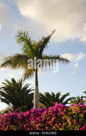 sch ne rosa baum blumen paradies apfelbaum auf einem. Black Bedroom Furniture Sets. Home Design Ideas