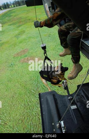Cezar, ein militärischer Arbeitshund zugewiesen 28. Militärpolizei Ablösung bei Fort Wainwright, Alaska, fährt zu - Stockfoto