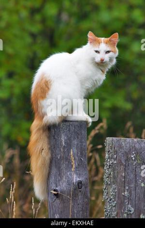 Katze auf einem Zaunpfahl - Stockfoto