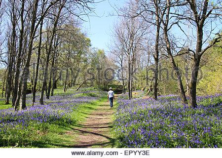 Der Pennine Way, Nr Low Kraft, obere Teesdale, Co Durham UK. 23. Mai 2015 Feiertag Samstag und einen schönen warmen, - Stockfoto