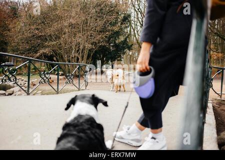 Geringen Teil der Frau mit Mischlingshund auf Brücke im park - Stockfoto