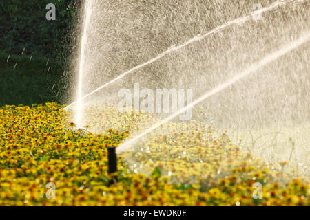 Sprinkleranlage im Garten - Stockfoto