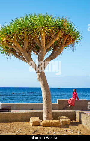 Dracaena Draco, Teneriffa, Kanarische Inseln, Spanien - Stockfoto