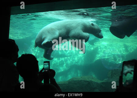 Besucher schauen als ein Eisbär (Ursus Maritimus) Tauchen im Schönbrunn Zoo in Wien, Österreich. - Stockfoto