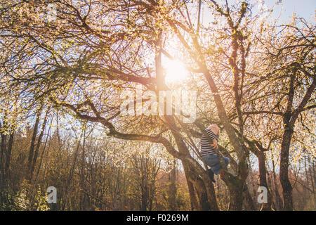 Junge, die einen Baum klettern - Stockfoto