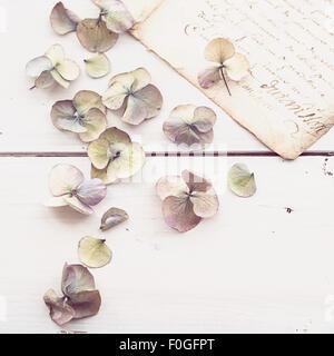 Nahaufnahme des verblichenen Hydrangea blüht mit Vintage Buchstaben im Hintergrund - Stockfoto