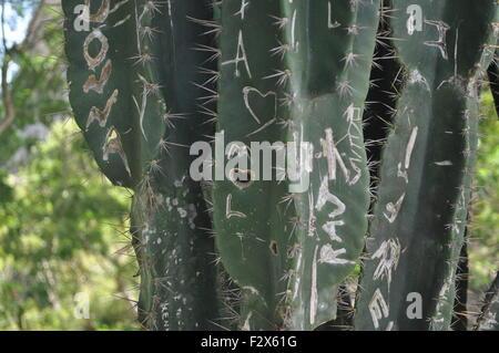 Liebe auf einem Kaktus - Stockfoto