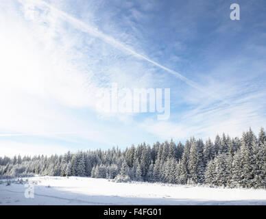 Winter-Wunderland-Wald - Stockfoto