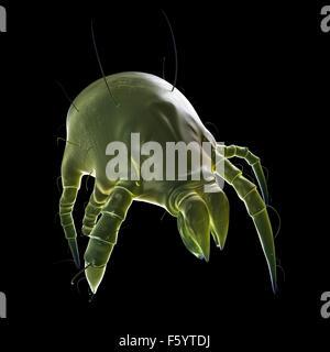 medizinisch genaue Abbildung von einer Staubmilbe - Stockfoto