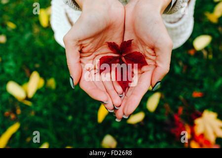 Herbstlaub in Händen der Mädchen - Stockfoto