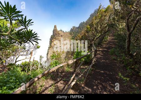 Wanderweg durch eine Lorbeerwald im Anaga-Gebirge mit Küstennebel, Chamorga, Teneriffa, Kanarische Inseln, Spanien - Stockfoto