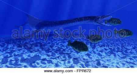 Ein Plesiosaurus marine Reptil schleicht sich hinter einer Schule von Dapedius Fisch, wie es für den Angriff geht. - Stockfoto
