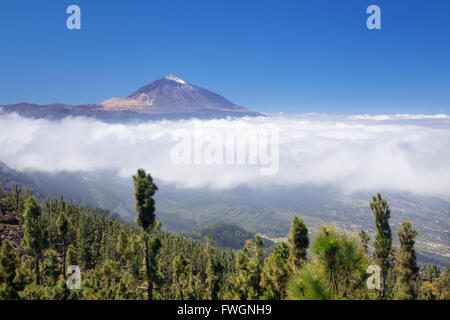 Blick über Orotava-Tal zum Pico del Teide, Nationalpark Teide, UNESCO-Weltkulturerbe, Teneriffa, Kanarische Inseln, - Stockfoto