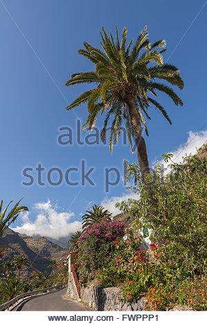 Pastrana, Barranco de Santiago, La Gomera, Spanien - Stockfoto