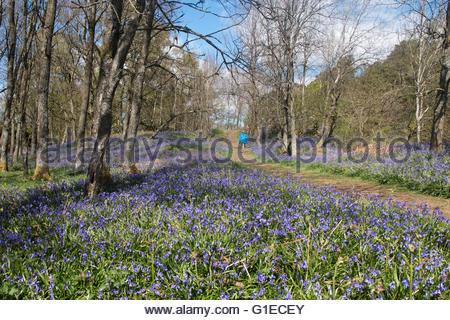 Holwick, Middleton-in-Teesdale, Co Durham, Großbritannien. 14. Mai 2016. An einem hellen klaren Tag in den Norden - Stockfoto