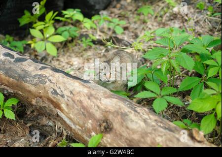Katze im Wald - Stockfoto