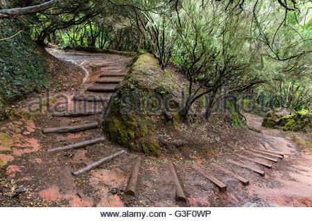 Alten Pfad schlängelt sich durch ein Lorbeerwald (Laurisilva) in das Anaga-Gebirge, Cruz del Carmen, Teneriffa, - Stockfoto