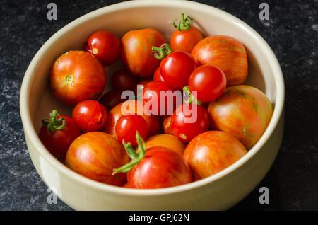 Eine Schüssel mit frisch gepflückten, selbst angebaute Tomaten. - Stockfoto