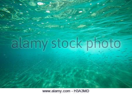 Unterwasser Fischschwarm Undersea schwimmen - Stockfoto
