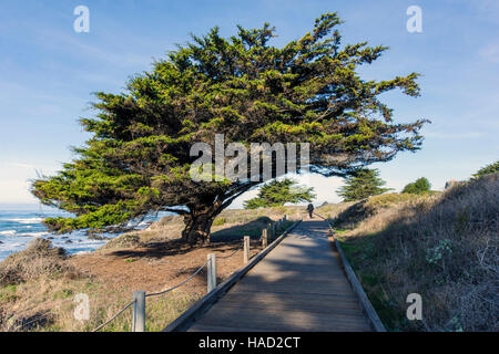 Frau zu Fuß Hunde auf Holzsteg; Zypresse; San Simeon State Park; San Simeon; Kalifornien; USA - Stockfoto