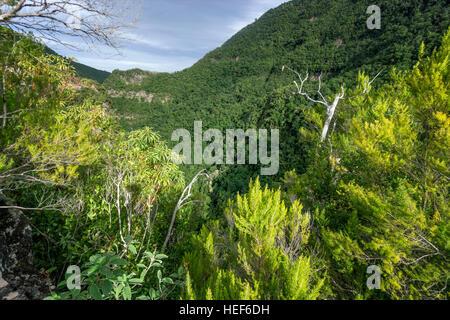 Sicht, Lorbeerwald Los Tilos-Biosphären-Reservat, La Palma, Kanarische Inseln, Spanien - Stockfoto