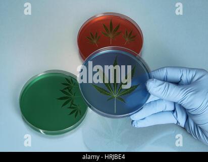 Medizinisches Marihuana - Stockfoto
