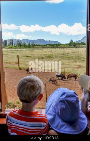 Mit dem Zug in Kauai: ein Vater und Kinder schaue aus dem Fenster der Kauai Plantage Bahn Kilohana, Weitergabe Wildschweine - Stockfoto