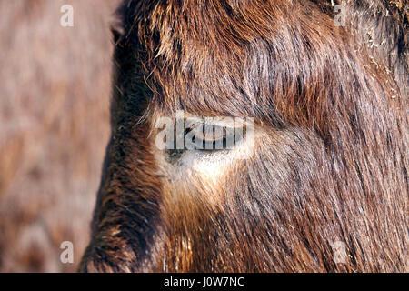 Esel hautnah - Stockfoto
