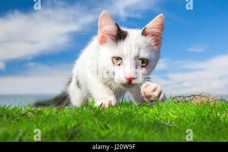 schöne Kätzchen auf dem grünen Rasen - Stockfoto