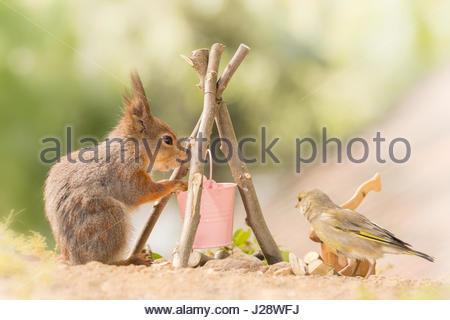 Nahaufnahme von Eichhörnchen stehend mit einem Eimer und Lagerfeuer mit ansehen, wie eine grüne finch - Stockfoto