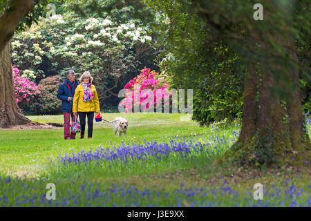 Paar walking Hund durch die Gärten, atemberaubende Rhododendren und Azaleen auf dem Exbury Gardens, New Forest National - Stockfoto