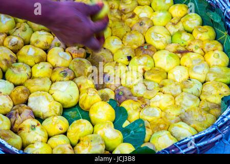 Reife gelbe Feigen in einer Korb und Hand abholen - Stockfoto
