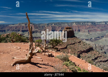 Blick von Cedar Ridge, Grand Canyon - Stockfoto