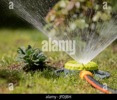 Tragbare Sprinkler bewässert reichlich Büsche und Rasengras - Stockfoto
