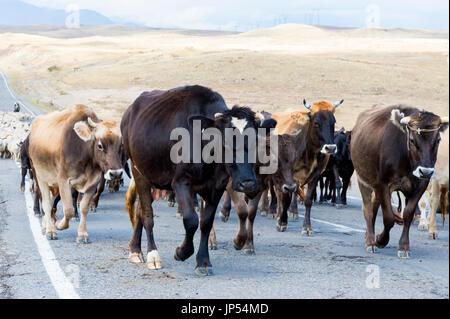 Shephard, die Durchführung von einer Gruppe von Kühen und Schafen auf einer Straße, Provinz Tawusch, Armenien - Stockfoto