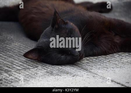 Schwarze Katze entspannt auf Steinplatten Vermeidung von der Hitze der Sonne - Stockfoto