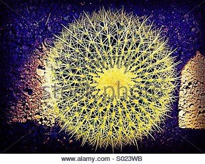 Kaktus-Liebe - Stockfoto