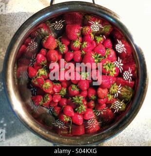 Erdbeeren in einem Sieb - Stockfoto