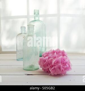 Vintage Glasflaschen mit Rosa Hortensie auf Fensterbank mit Licht getaucht - Stockfoto