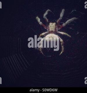 Spinne im Netz - Stockfoto