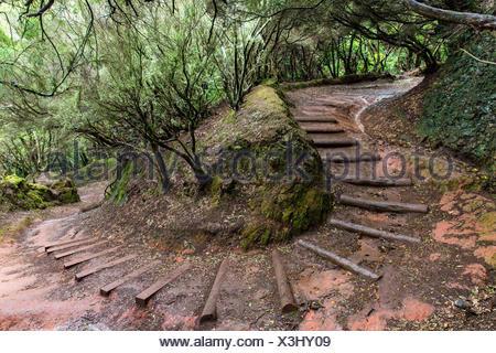 Alten Pfad schlängelt sich durch ein Lorbeerwald (Laurisilva) in das Anaga-Gebirge, Cruz del Carmen, Teneriffa, Kanaren, Kanarische Inseln, Spanien - Stockfoto