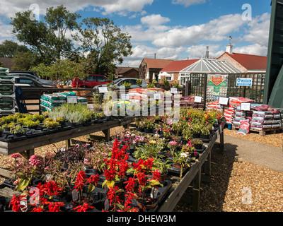 Plantas de jard n t pico ingl s flores estanque ornamental for Jardin en ingles