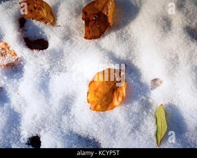 Snowy camino entre los hayedos temprano en el invierno bosque. La ...