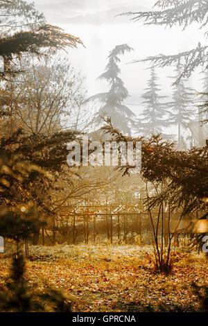 Une forêt d'automne prairie avec des feuilles de couleur et d'arbres tombés dans les silhouettes au petit matin. Banque D'Images